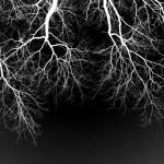 Blut – Lunge –Leben II
