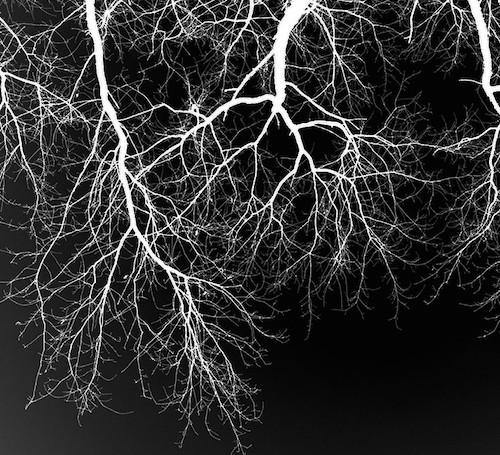 Blut –Lunge –Leben