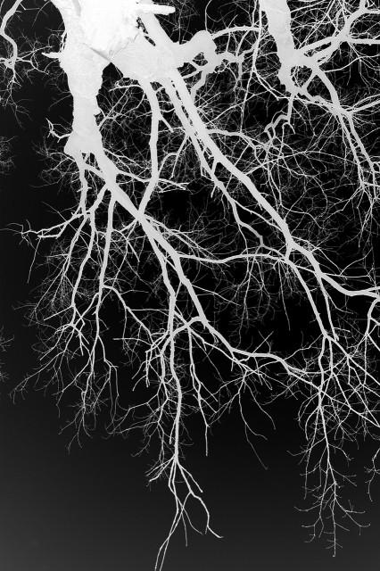 Blut – Lunge –Leben IV