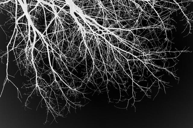 Blut – Lunge –Leben V